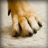 pet claw